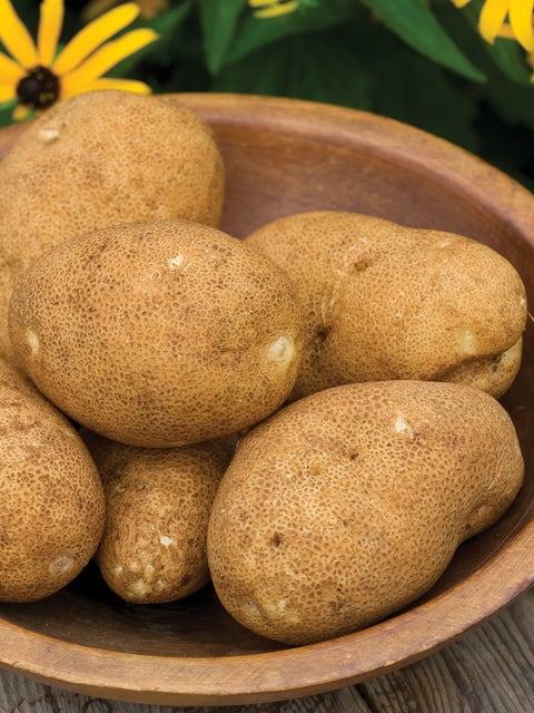 Potato, Rio Grande Russet