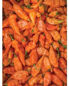 Pepper, Sweet, Habanero Habanada