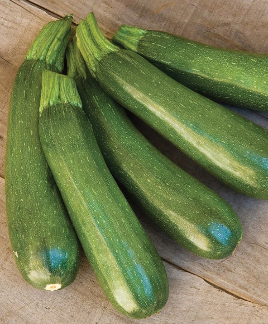Squash, Summer, Fordhook Zucchini