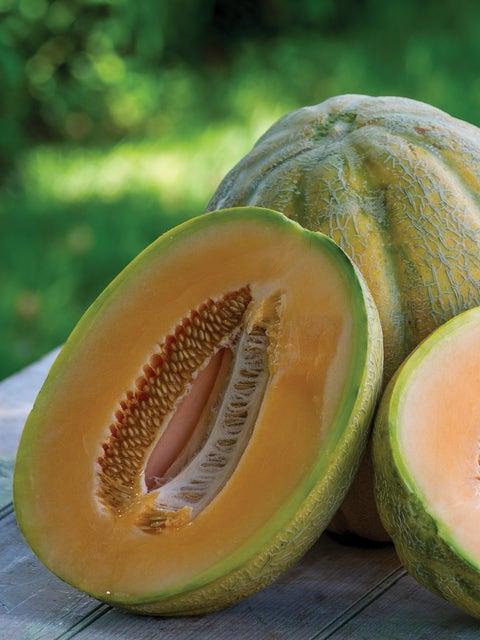Cantaloupe, El Gordo Hybrid