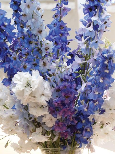 Delphinium, Fordhook Cottage Garden Mix