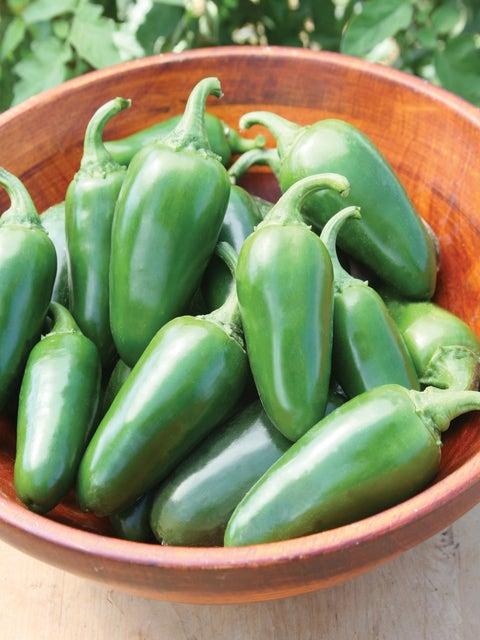 Pepper, Hot, Jalapeño Early