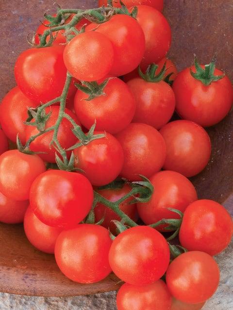 Tomato, Sweetie Organic