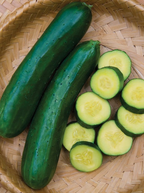 Cucumber, Gold Standard Hybrid