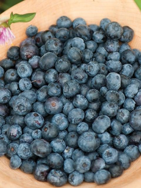 Blueberry, Duke